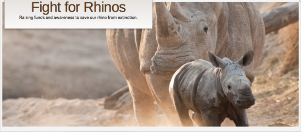 fightforrhinos